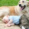 Cani e gatti: uno scudo contro le allergie infantili
