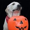 Halloween a misura di pet
