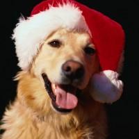 Un Natale a misura di cane e gatto