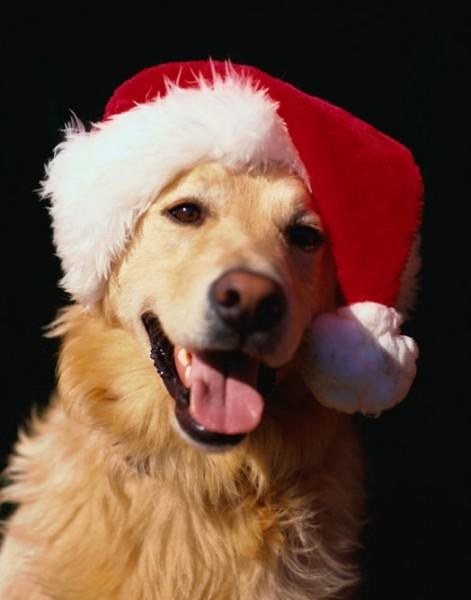 Immagini Cani Natale.Un Natale A Misura Di Cane E Gatto Innovet
