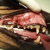 Salute parodontale: garanzia di benessere