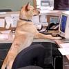 Il cane: un anti-stress da ufficio