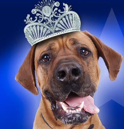 """Fai diventare il tuo cane una """"Dog Star"""""""