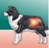 Nuove terapie per la IBD del cane e del gatto