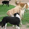 Cani al parco? Attenti alle insidie