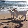 I gatti sardi soffrono di artrosi