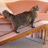Controllare il dolore da artrosi nel gatto