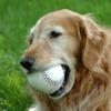 Cane anziano: non sottovalutare i segni patologici