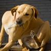 """Prurito e PEA nella """"top five"""" di Veterinary Dermatology"""