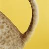 Prevenire la cistite del gatto