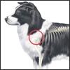Artrosi di spalla, una malattia primaria