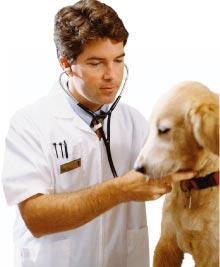 regole-veterinario