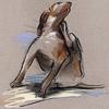 Gestione del cane con prurito