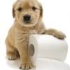 La PEA nella diarrea da stress