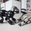 Foof, il primo museo del cane
