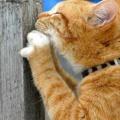 Sono un gatto, dunque graffio