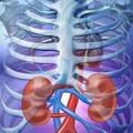 Negli USA la PEA per le malattie renali