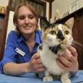 Gatti anziani: servono check-up veterinari periodici