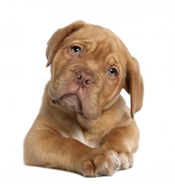 L'artrosi del cane: una malattia dolorosa che limita il movimento