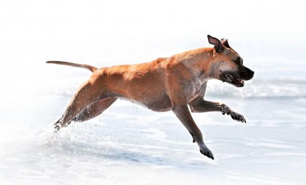 Un cane in movimento è un cane sano