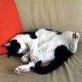 Linee guida per un ambiente a misura di gatto