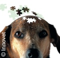 Un test per diagnosticare la demenza senile