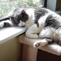 Artrosi: un male da gatti!