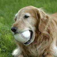 Come aiutare il cervello dei cani anziani