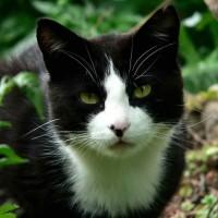 Il Gatto con La Sindrome di Pandora