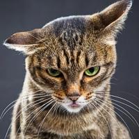 Reni e articolazioni a rischio nel gatto