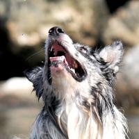 Salute orale del cane e del gatto: sfatiamo i falsi miti