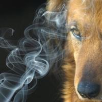Il fumo passivo fa male anche ai cani
