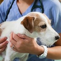 Le prime 5 malattie del cane