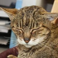 Una casa a misura di gatto anziano
