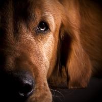 Novembre mese del cane anziano