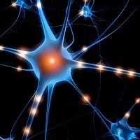 Proteggere il cervello con il resveratrolo