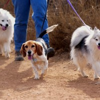 L'artrosi nel cane