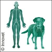 Dolore dell'uomo e del cane a confronto