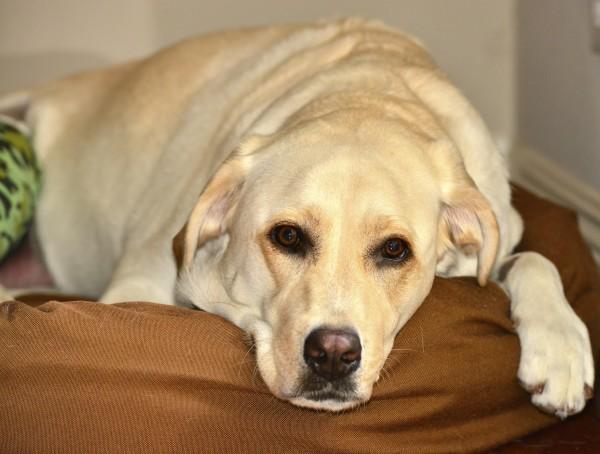 Préférence I molti dolori di cani e gatti - Innovet EA67
