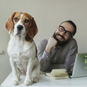 Tutti i benefici del cane in ufficio in uno studio