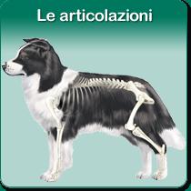 Le articolazioni: organi di movimento