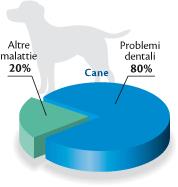 grafico_cane