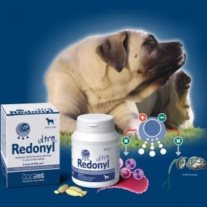 Redonyl® Ultra approda sul mercato globale.