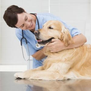 Veterinario visita cane