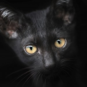 10 buoni motivi per adottare un gatto nero