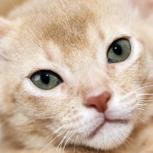 Dolore: differenze tra cane e gatto