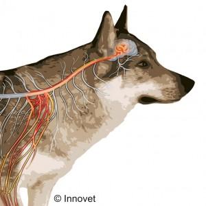 Un'indagine italiana sul dolore ortopedico del cane