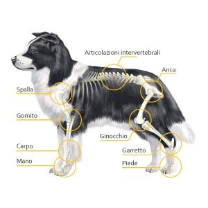 Una guida per la salute articolare del cane