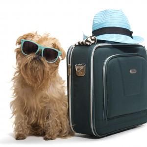Cane con valigia e occhiali da sole pronto per partire