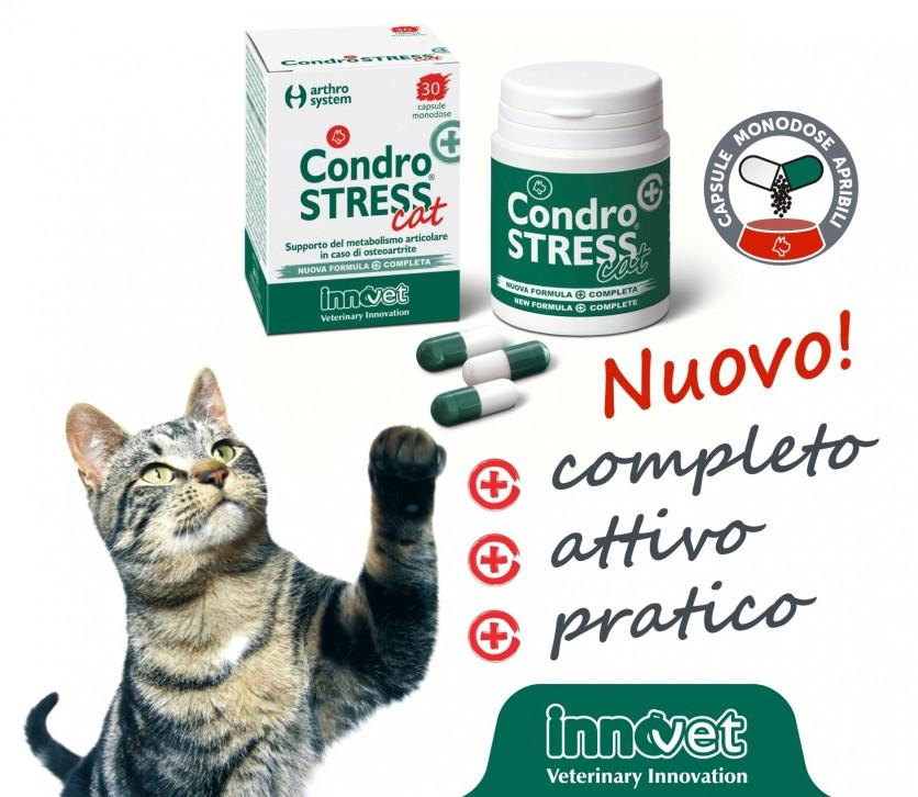 Un Condrostress® (+) solo per gatti